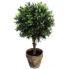 Topiary in pot